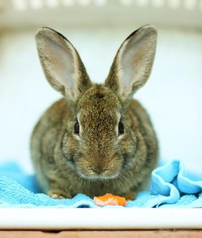 Mam na imię Bunny i lubię marchewki