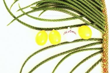 Cytrynowa choinka