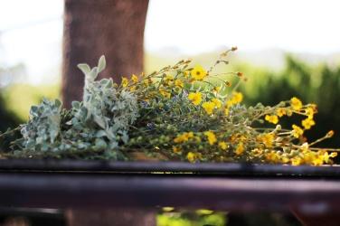 Najbardziej aromatyczne zioła jakie w spotkałam
